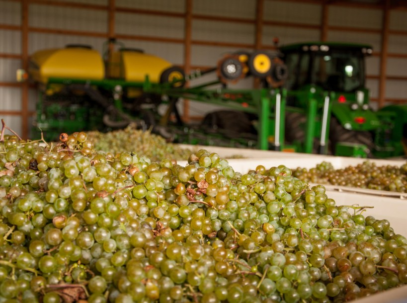 This photo tells it all!   You can tell we're in Iowa with the John Deere farm implements behind the grapes.