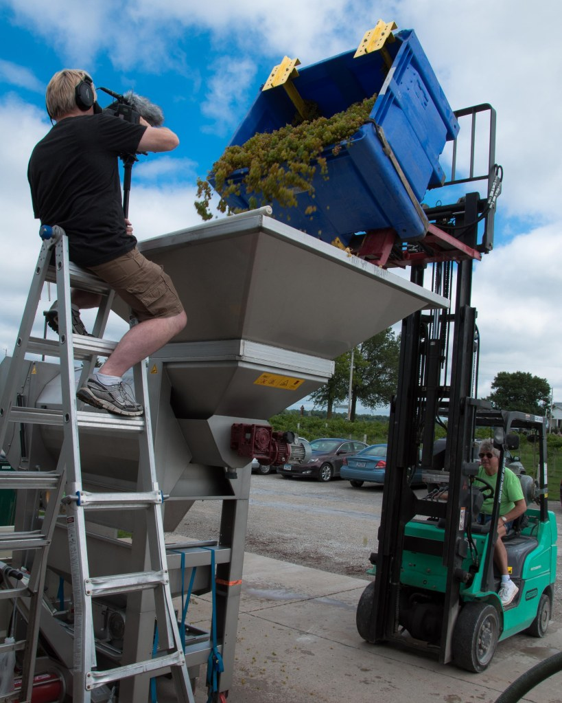 Kirk filming the unloading of LaCrosse into Crusher-Destemmer machine.