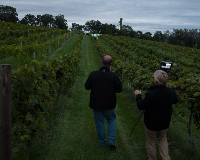 Slowly walking behind the drone down a vineyard row