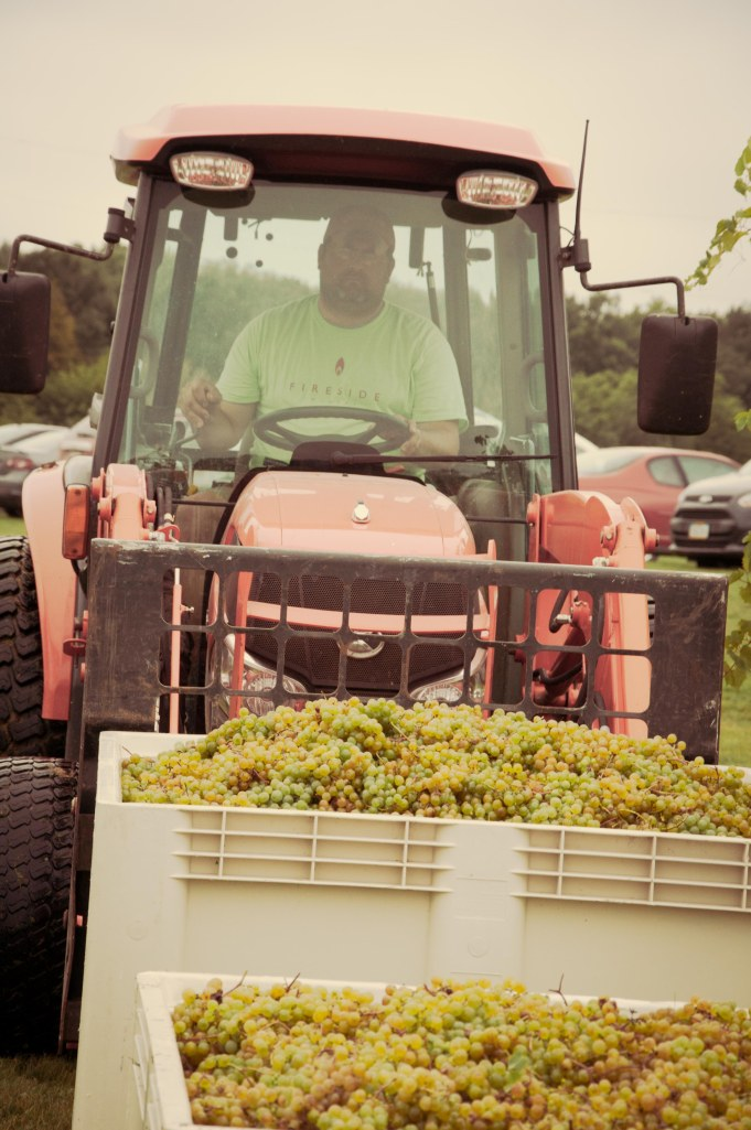 Zach moving macro bins of wine grapes