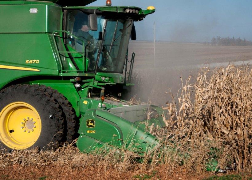 Combine harvesting corn crop